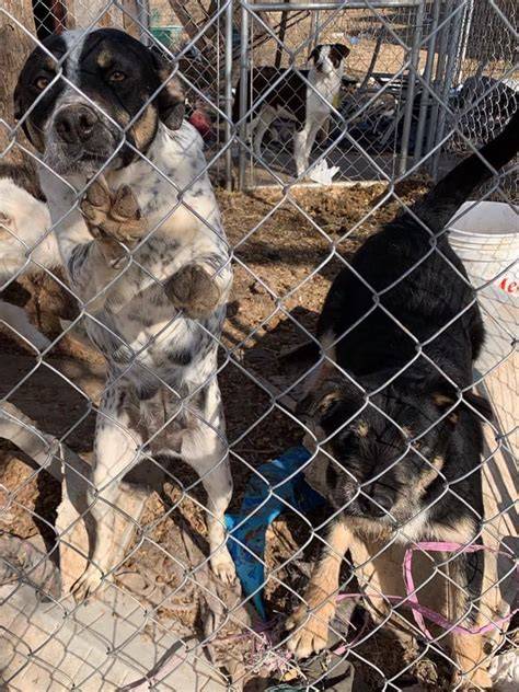 Humane Society of Tulsa rescues 53 dogs from foreclosure