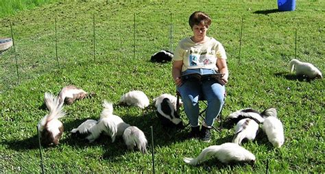 Pet Skunks May Soon Be Legal in Tennessee - Wide Open Pets
