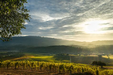 California Wine Country Needs Your Help - D Magazine