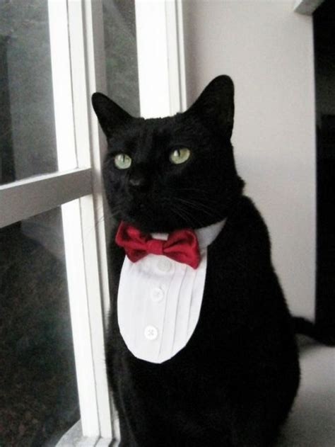 Top 10 Best Cats With Bow Ties Pictures - Bro J Simpson