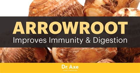 Arrowroot: Use It to Boost Immunity & Soothe Digestion