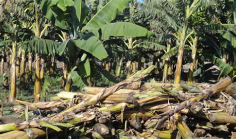 Discovered: Method to turn agricultural wastes into
