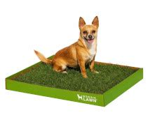 Best Indoor Dog Potty: Large & Small Dogs (Top 5 w/ Reviews)
