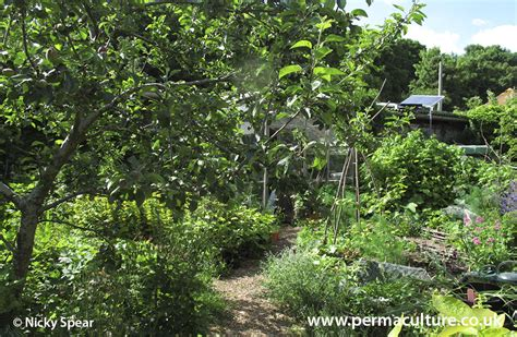 Forest Gardening - does it really work?   Permaculture