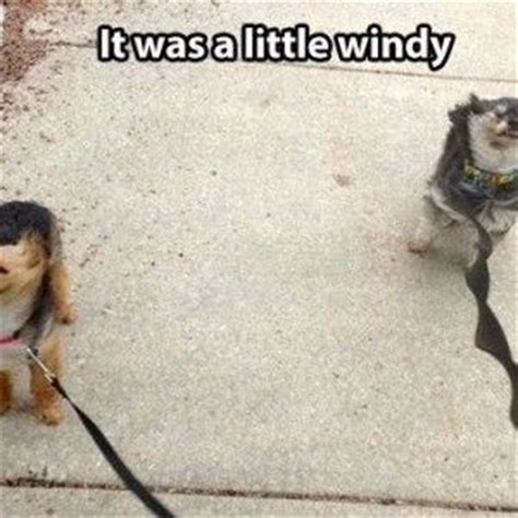 Funny Quotes about Windy Weather | Funny Quotes