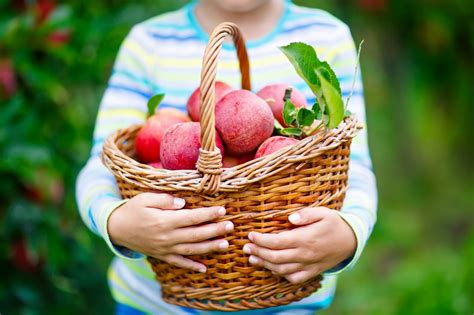 U-pick apple orchards in Central PA | Central Penn Parent