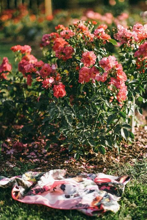 Rose Garden Editorial Photoshoot - MY CHIC OBSESSION