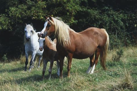 Pregnancy in Horses - Symptoms and Stages