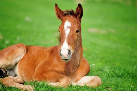 Caring for Orphan Foals – The Horse