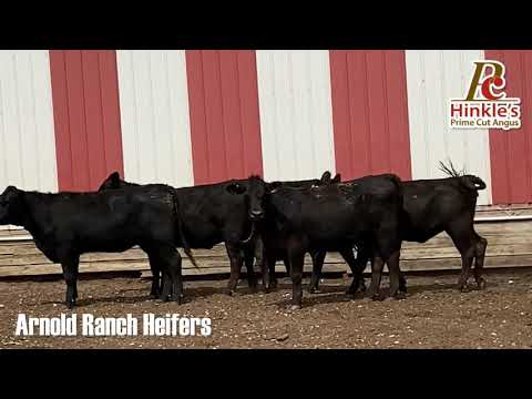 For Sale: 6 Red Brangus Bred Heifers | Cattle Exchange