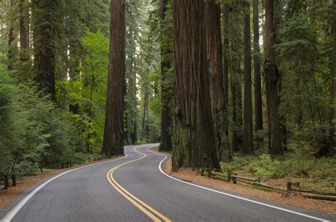 Redwood Highway: Northern California's Most Scenic Drive