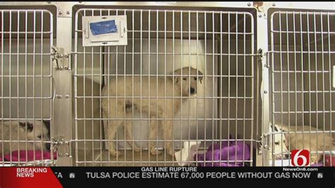Tulsa Humane Society Rescues 52 Dogs From Home - News On 6