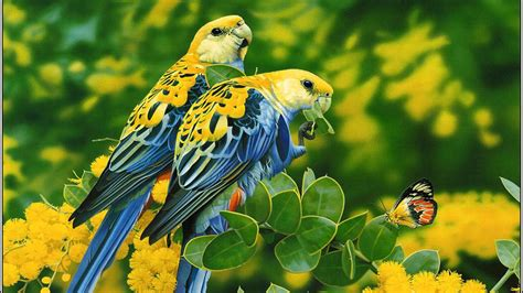 Birds Blue Yellow Parrots Butterfly Tree With Yellow