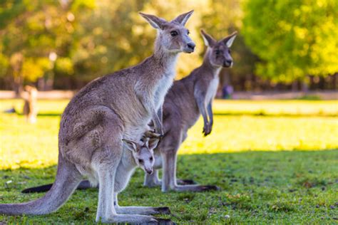 Australia Facts for Kids   Australia for Kids   Geography