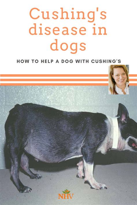 41 best Cushing's Disease In Dogs images on Pinterest