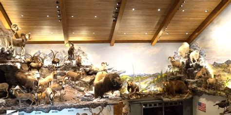 Michigan Hunter Has The Most Insane Trophy Room You've