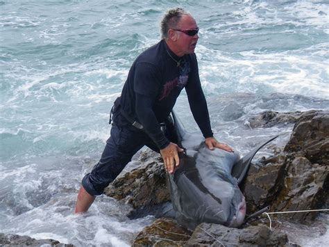 Great white shark catcher convicted - Photo 1 - Pictures