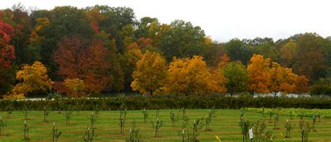 Anderson Orchard - Mooresville Indiana