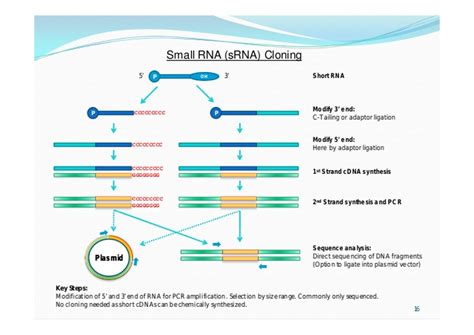 Approaches to cDNA Cloning and Analysis